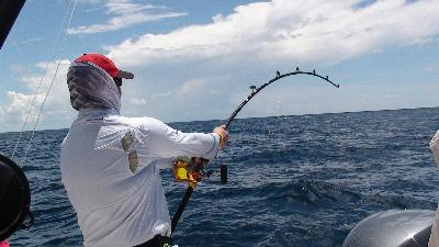 Penn Rod And Reel Combos Rod And Reel Combo | Bass