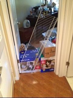 Indoor Wooden Dog Gate Panel Zig Zag Dog Gates Orvis