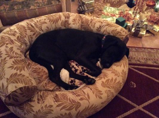 pet 39 s choice pharmaceuticals bully sticks 12 dog treats 6 pack. Black Bedroom Furniture Sets. Home Design Ideas