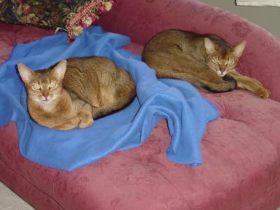 Rated 4 out of 5 by Catman2 My abyssinian cats love this food, but ...