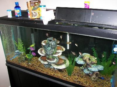 Solar system kit walmart prices pics about space for Fish tank kits walmart