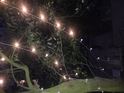 Party Verlichting Tuin : Bol partyverlichting feestverlichting buiten led d