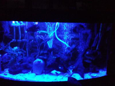 bol.com | LED aquarium lamp BLAUW 48cm