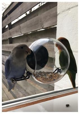 Fabulous bol.com | Born In Sweden Birdfeeder Raamvoederhuisje - Transparant IY97