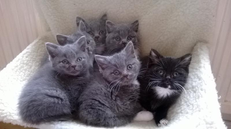 Beautiful kittens we bred on Purina