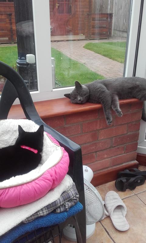 invited neighbours cat in for a nap