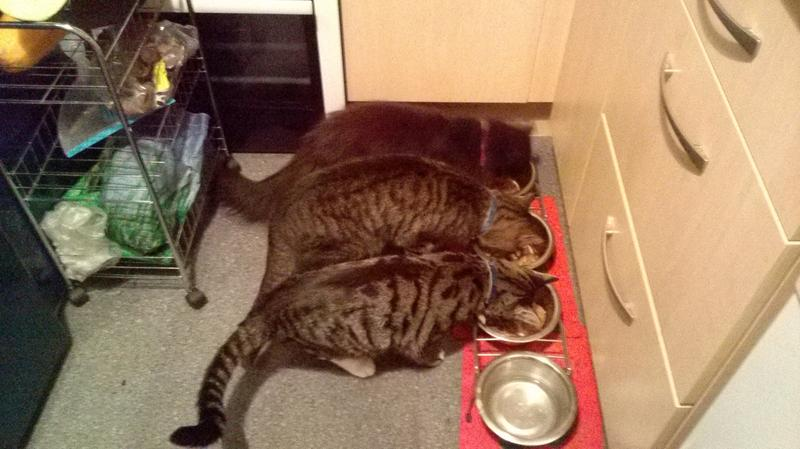 enjoying dinner,only time all three will eat together is when its gocat crunchy and tender