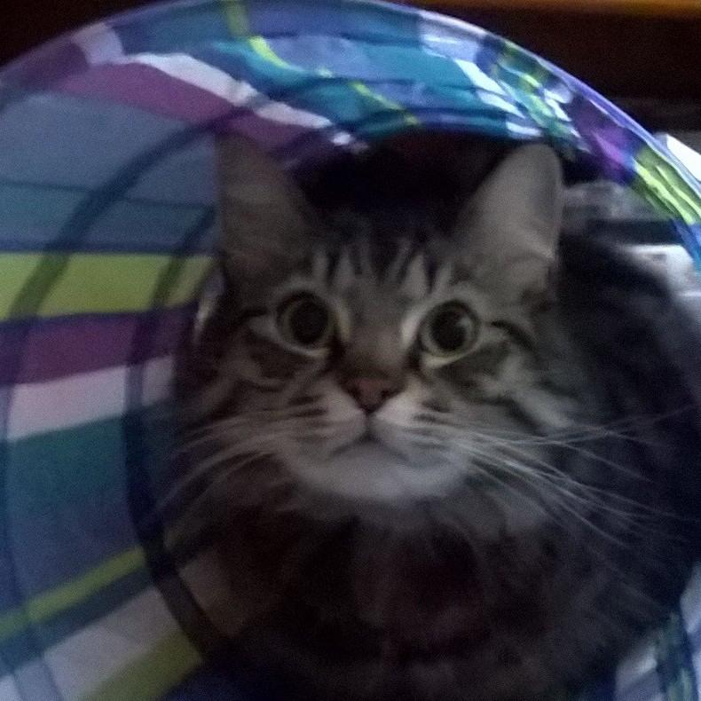 this is him in his play tent