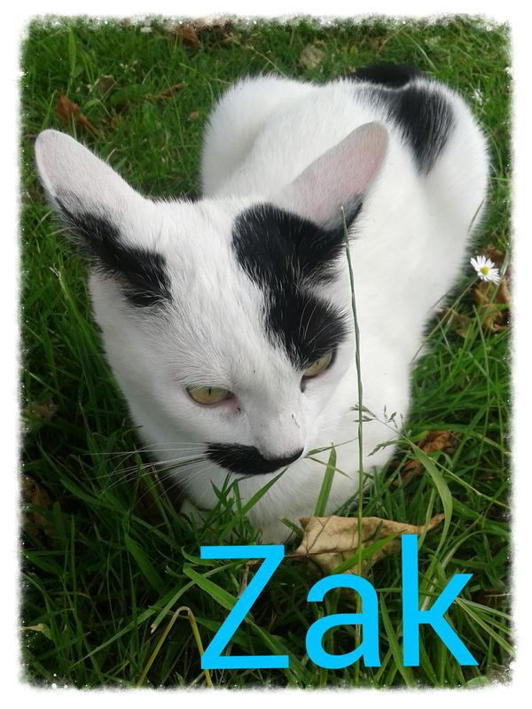 my 5 year old cat zak