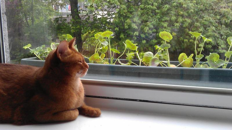 Watching for birds in the window box