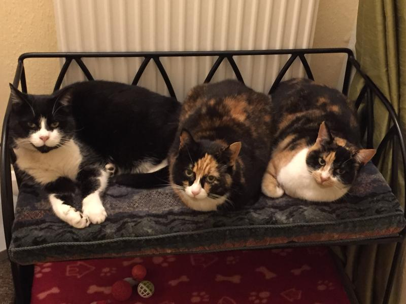 2's company - 3's a crowd - of happy cats by a warm radiator!
