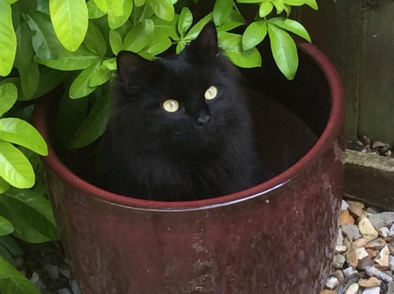 Harley in my flower pot after his meal.
