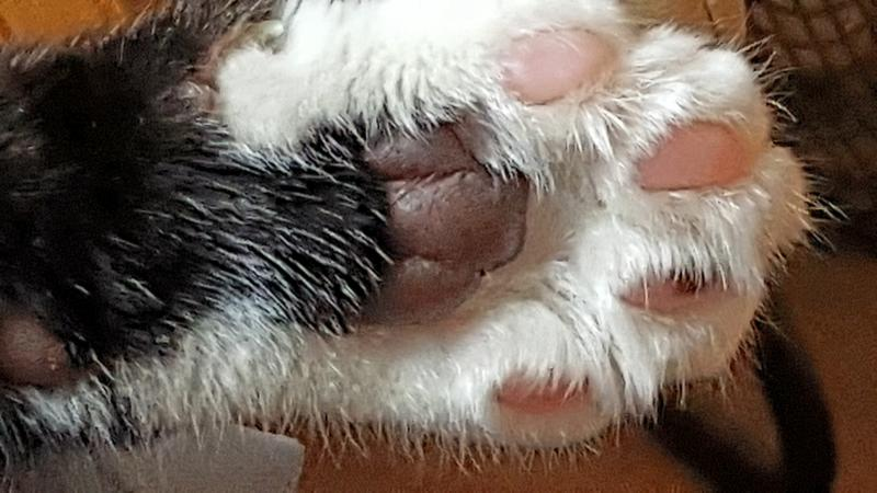 """Paws up"" for Felix"