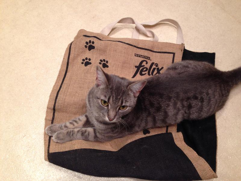 Honey loves my felix shopping bag and is hitting for some felix for tea