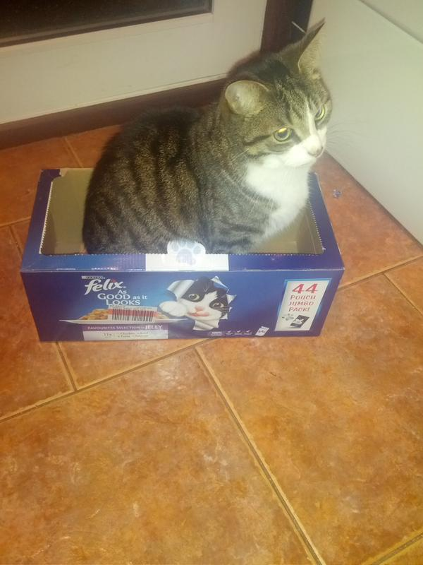 theo even loves the box they come in
