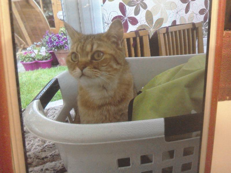 I'm Ossie and I like to help Mum with the washing