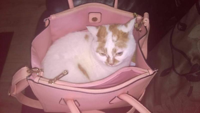 my tigger hiding in my bag to go to the supermarket with me to get more felix hehe
