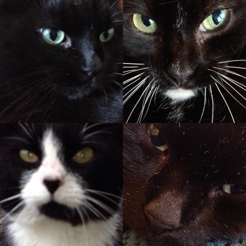 My four boys, Gic, Gwuffy, Little Legs and Walter