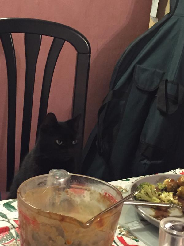 Tootsie wants to eat with us especially when it's felix