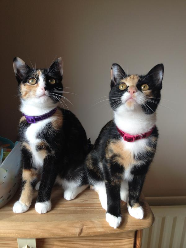 The PipSqueaks (Pip on the Left and Squeak on the Right)