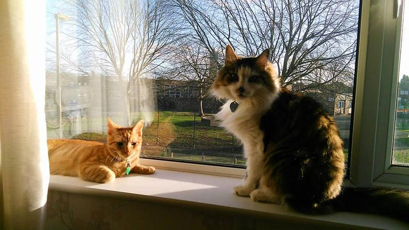Ollie And Monty On Windowsill