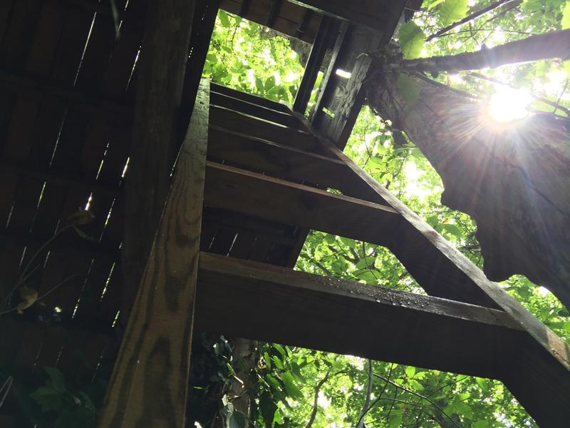 Lambourde pour terrasse bois résineux Pin, vert, L.3 m x l.7.5 cm ...