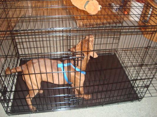 Carry My Dog Crate Reviews