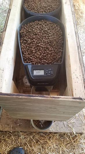 petsafe 5 meal automatic feeder manual