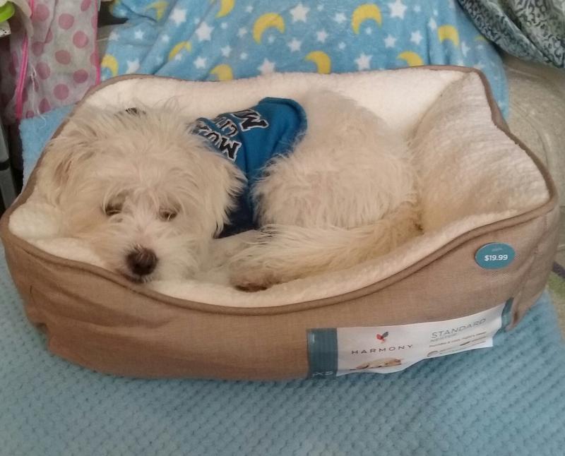 comfortable dog beds harmony khaki nester dog bed petco