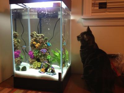 15 gallon column aquarium 1000 aquarium ideas for 15 gallon fish tank stand