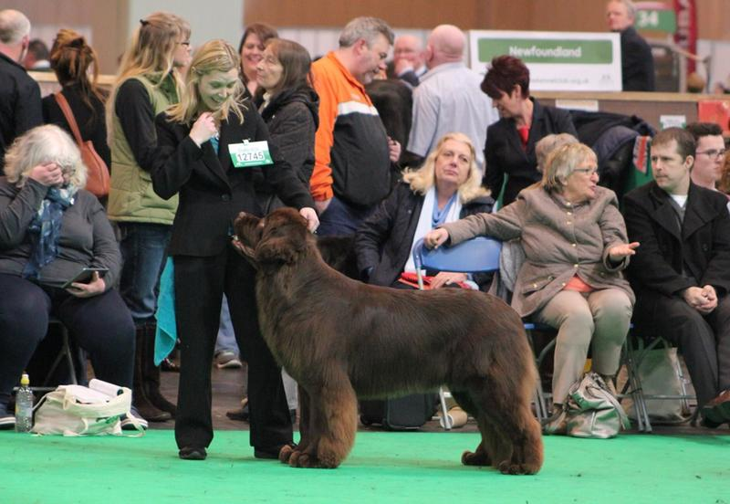 Having fun in the show ring at Crufts 2016