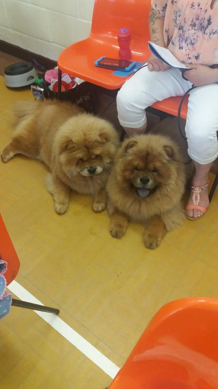 My young chows