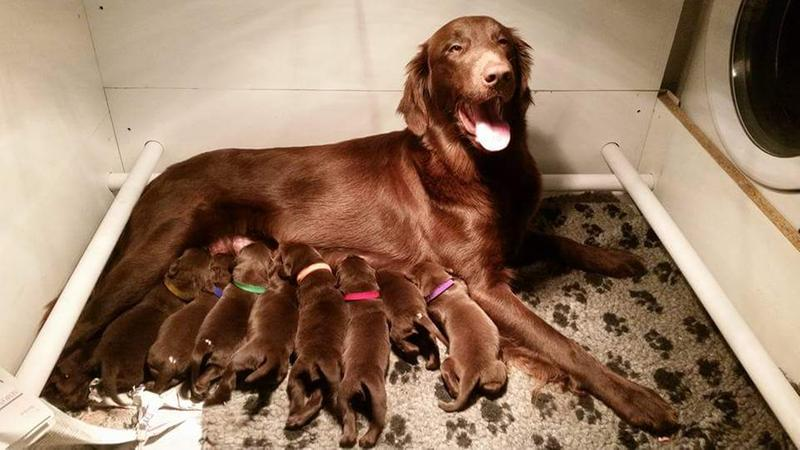 Flo and her brood