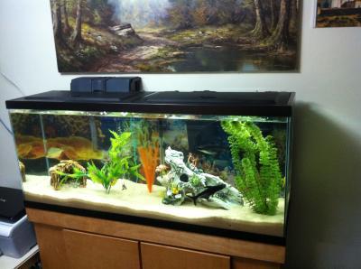 Walmart aquarium plants top basic aquarium empty gallon for 50 gallon fish tank starter kit