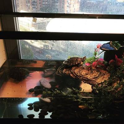 Turtle Tanks Walmart