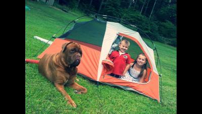 sc 1 st  Walmart & Ozark Trail 1-Person Hiker Tent - Walmart.com